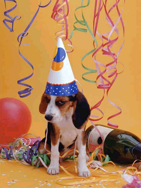 Happy birthday party dogs